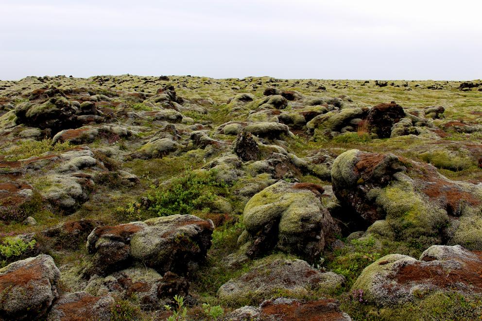 i viaggi della patta-Islanda-campi lava