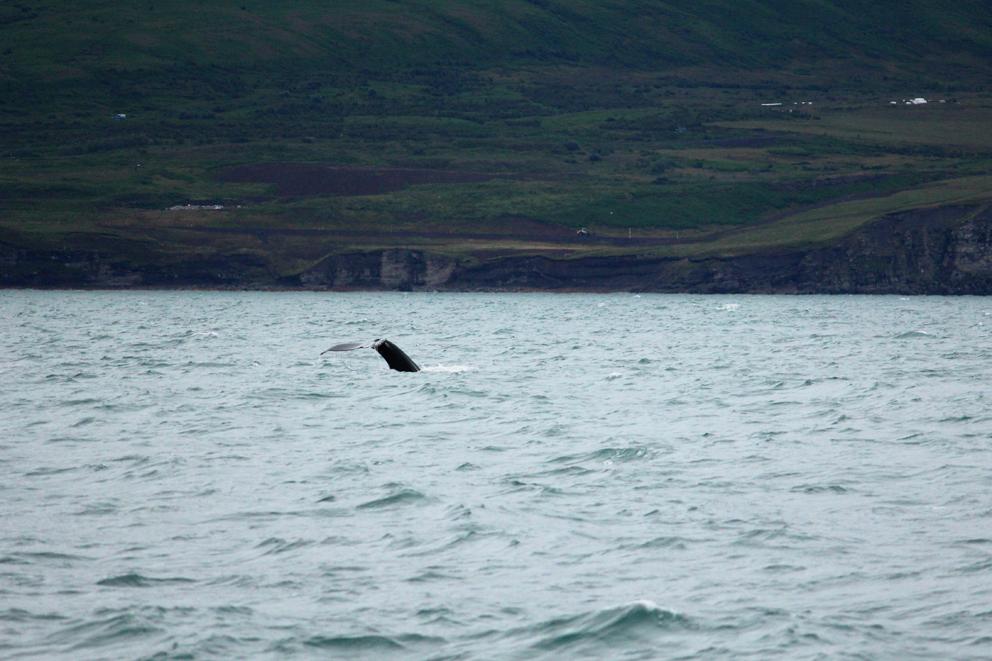 i viaggi della patta-Islanda-Husavik 3