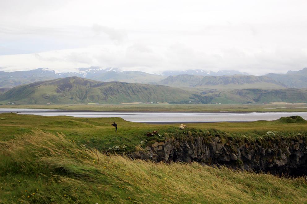 i viaggi della patta-Islanda-Kirkjufjara Beach puffins