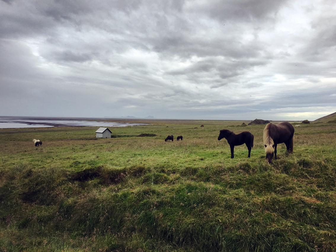 i viaggi della patta-Islanda-the garage horses